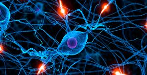 neurologia bologna